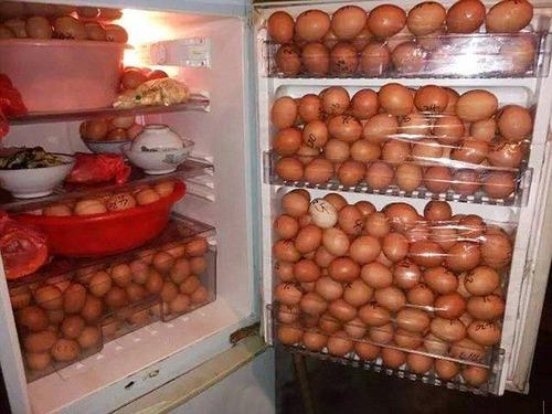 工場の食堂から少しづつ卵を盗んでいたとして警備員が逮捕→自宅の冷蔵庫から400個の卵が見つかる