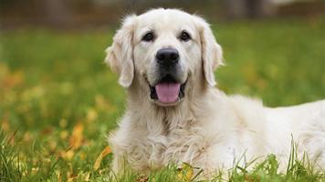 要注意!2月は犬の「チョコレート誤飲」が急増する!犬はチョコに弱い