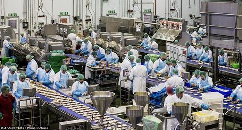 サンドイッチ工場の真実 素手でチーズやハムをパンの上に乗せていたことが判明