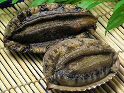 J( 'ー`)し「アワビ美味しいね」ヽ('∀`)ノ ワーイ →ロコ貝(アワビモドキ)でした