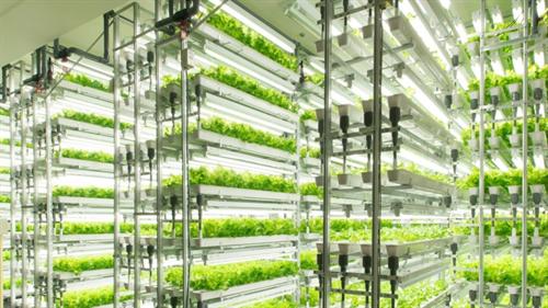 企業「野菜の工場生産はコスト掛かって駄目だ撤退」