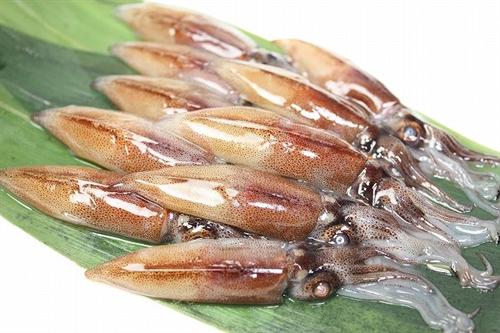富山湾ホタルイカ大物が続々 生後1年超の個体か 「ことしのホタルイカは何か変」
