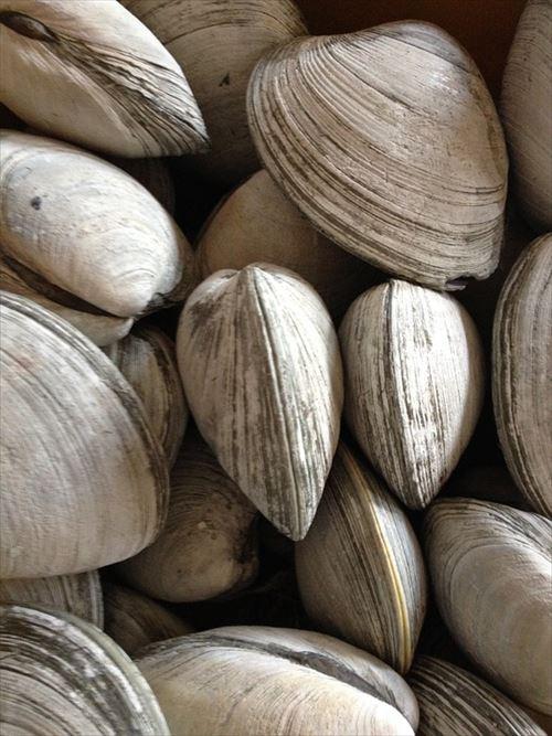 貝「海の底で硬い殻にとじ込もってジッとしてたら生き残れるやろw」