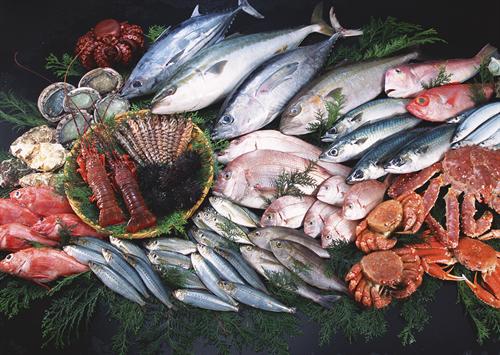 一番魚介が美味い県ってどこなんや?