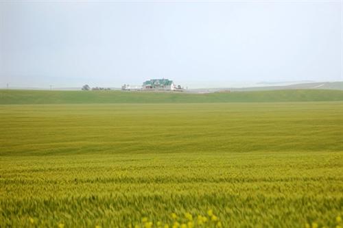 カリフォルニア米の衝撃 お米がなんと5kgで650円