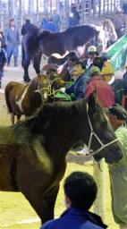 ばんえい競馬、新馬登録過去最低か 高値が付く馬肉用に流れ200頭割れの危機