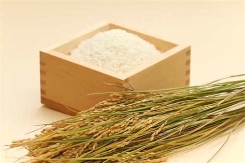 プラスチックで作った中国のニセ米が市場に流入か