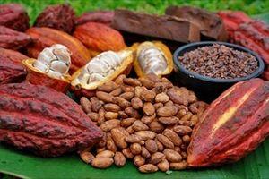 チョコレート、カカオ不足で2020年には世界から消える恐れ