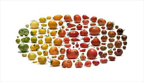 スーパーや市場では廃棄されてしまう規格外の果物や野菜を集めた写真集