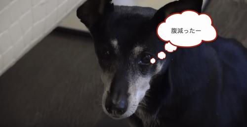 【超朗報】ダルビッシュ有さん、なぜかチャーシューを作る動画をyoutubeにアップ