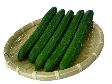 野菜は見た目が重要 曲がったきゅうりは育て方が悪い