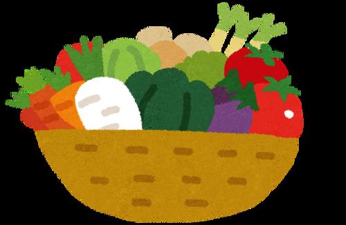 レタスやキャベツなどの葉物野菜の価格が下がる キュウリ、トマトなどは上昇