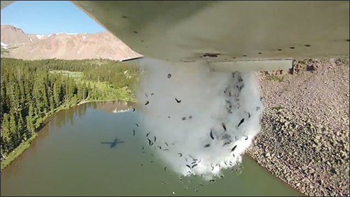 空から数千匹の魚を飛行機でばら撒く アメリカの湖に「放流」する動画を公開