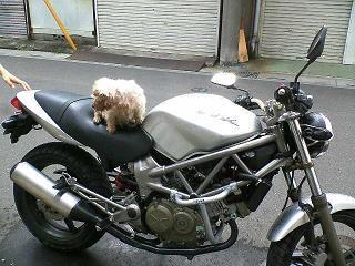 VTR×犬