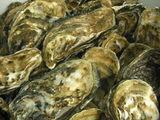小豆島牡蠣