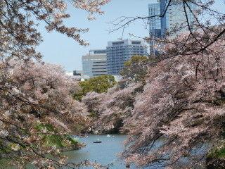 千鳥ヶ淵桜jpg