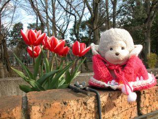 tulipみに