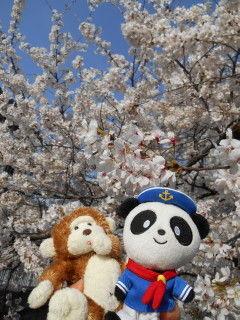 桜3jpg