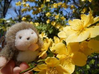 黄色い花jpg