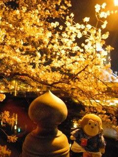 夜桜jpg