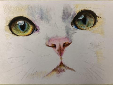 色鉛筆猫⑤