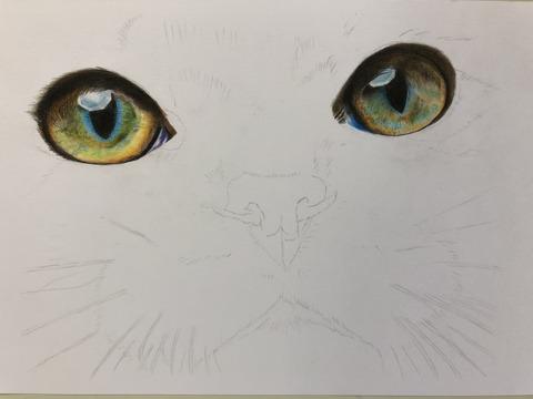 色鉛筆猫③