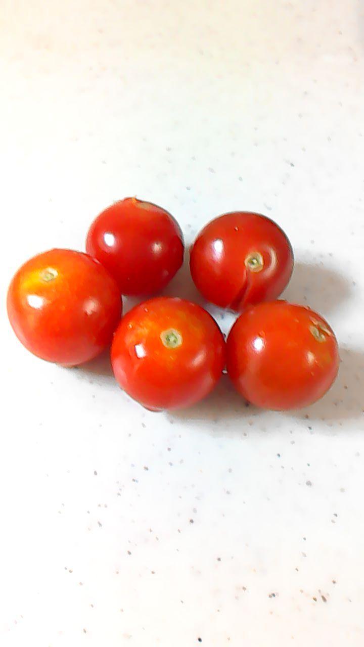 7月10日 トマト