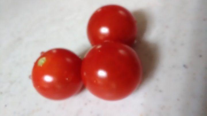 7月9日 トマト