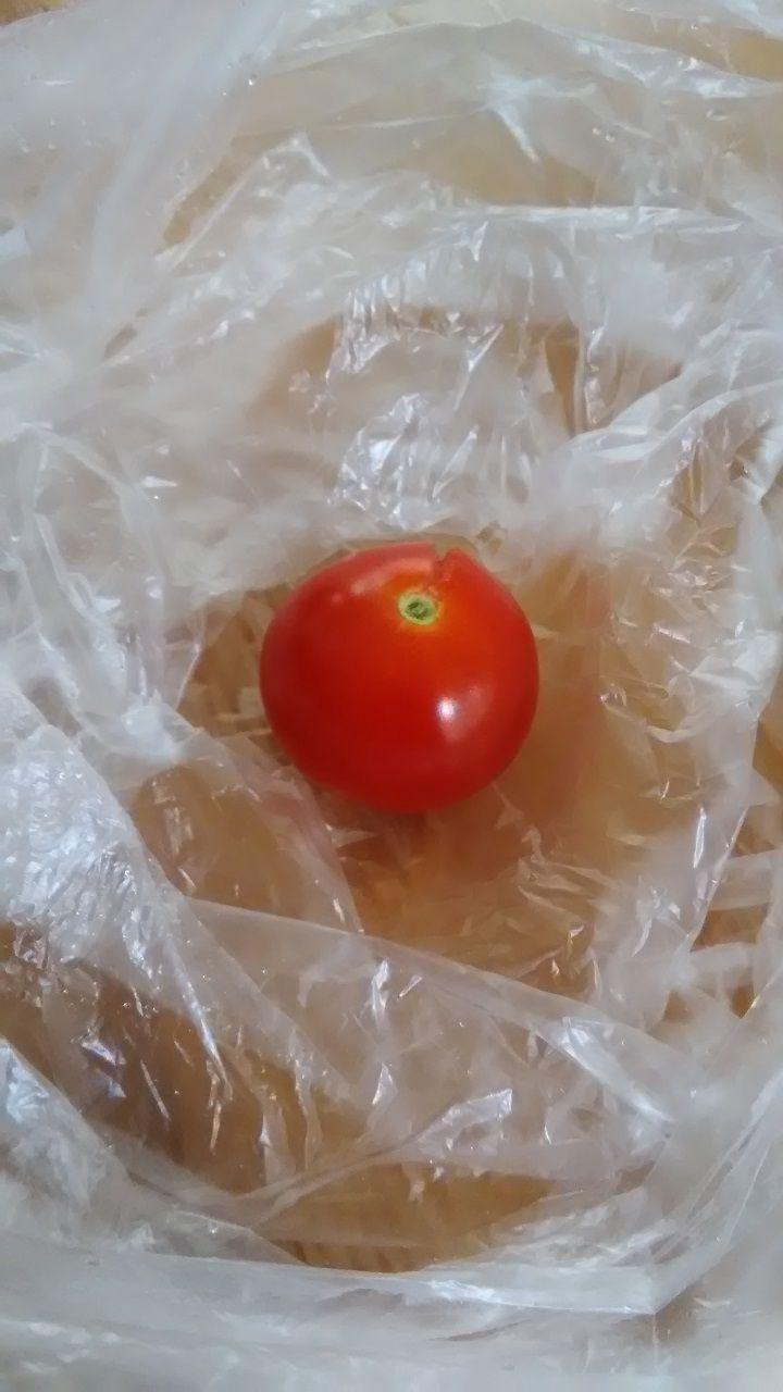 7月7日 トマト