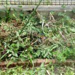 草刈り(集めた草)