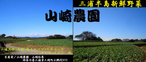 山崎農園-畑