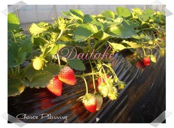blog-daitake2