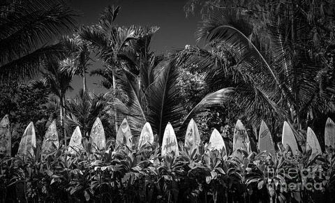 surf-board-fence-maui-hawaii-black-and-white-edward-fielding