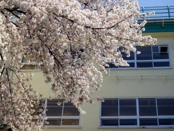 外国人には厳しい?日本の学校生活