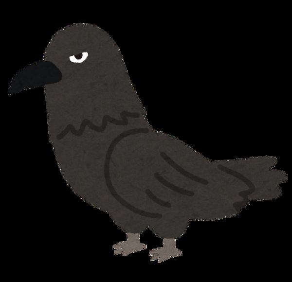 bird_karasu_kowai (1)