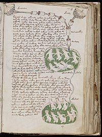 200px-Voynich_Manuscript_(141)