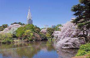 300px-Shinjuku_Gyoen_National_Garden_-_sakura_3