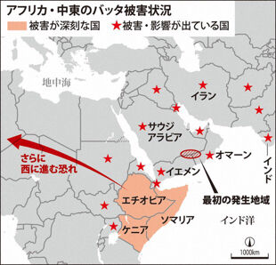 バッタ デマ 中国