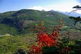 60 下山の途中の紅葉の木