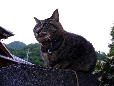 sasuke060530-1