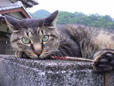 sasuke060828-1