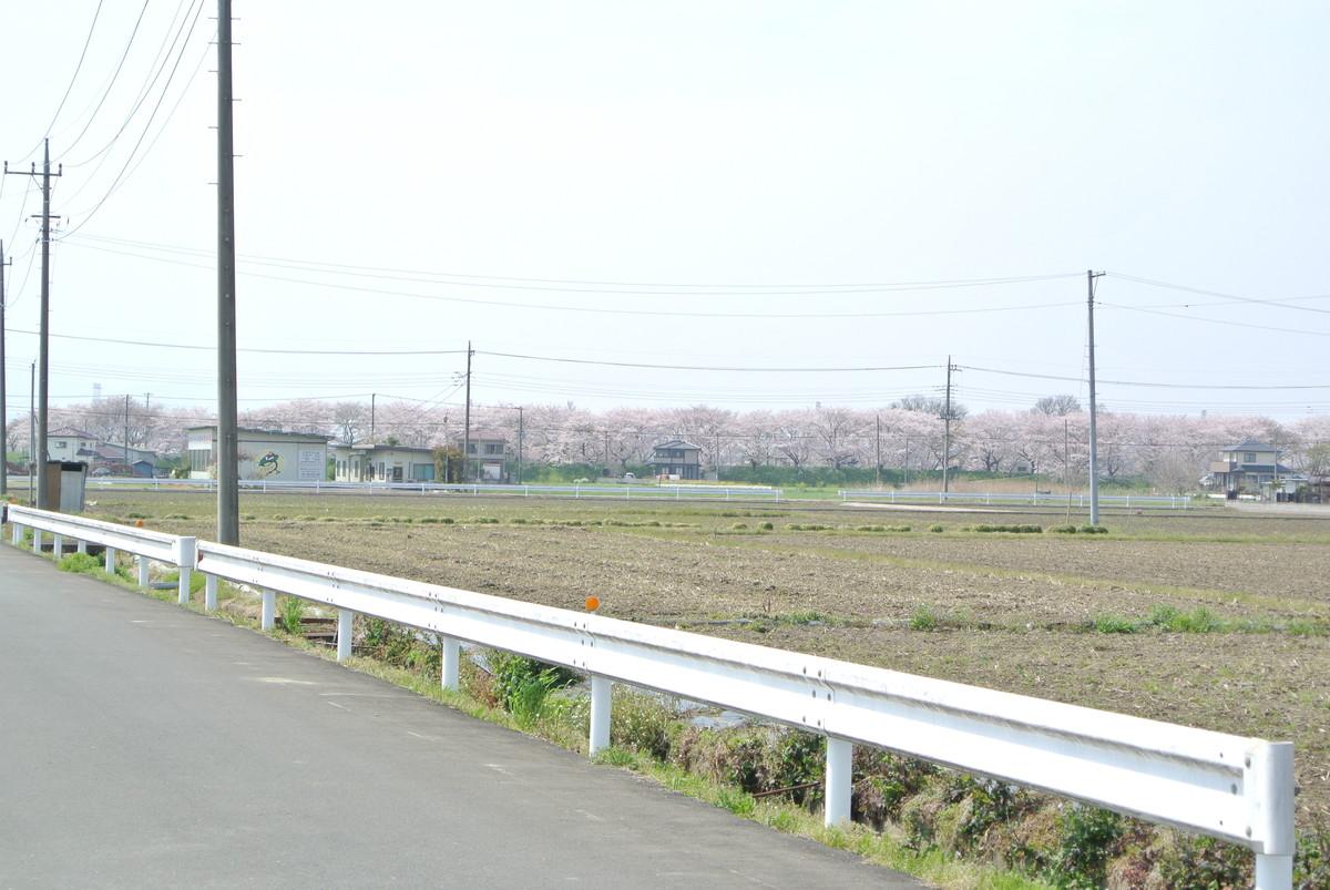 sakuradutsumi (7)