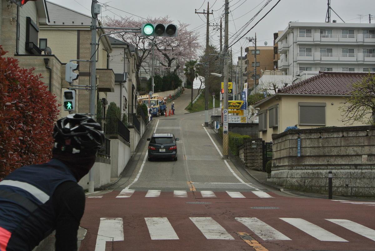kanagawasakura (9)