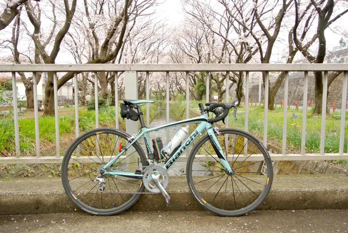 kanagawasakura (16)