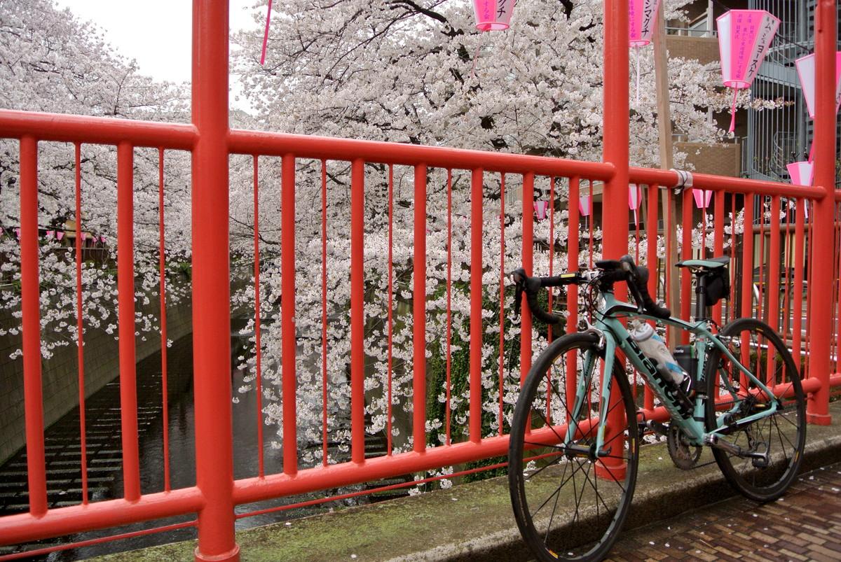 kanagawasakura (5)