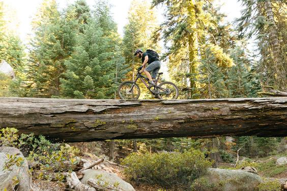 ACRE_Sequoia_MTB-102