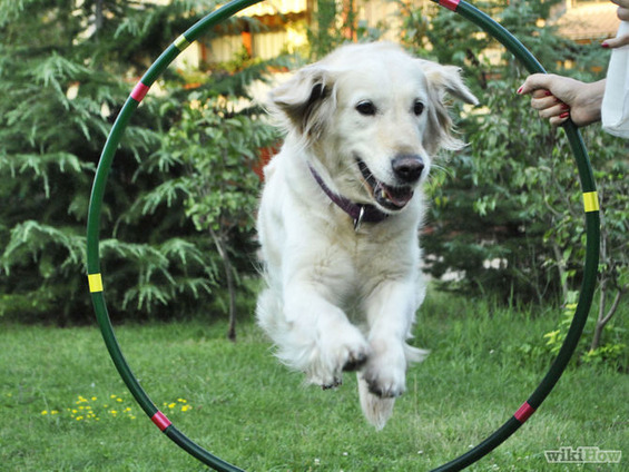 670px-Train-a-Dog-to-Jump-Through-a-Hula-Hoop-Step-6