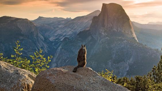 squirrel-sunrise-yosemite