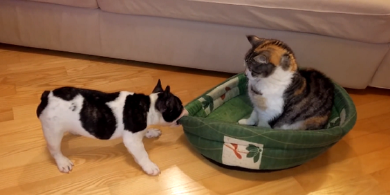 cat-vs-dog-struggle-2-660x330
