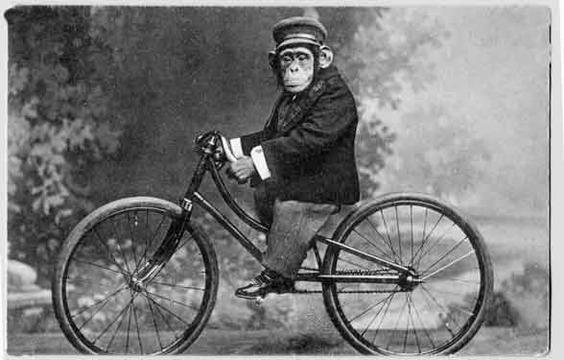 monkey-on-bicycle